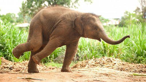 слоненок видео
