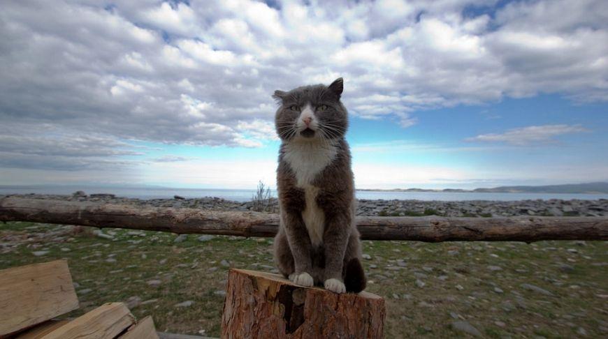 кот возле Байкала