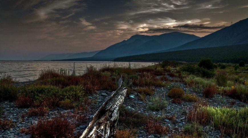 редкая растительность Байкала