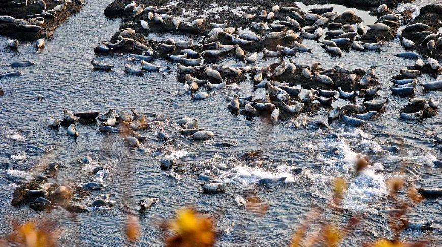морские котики плещутся в воде