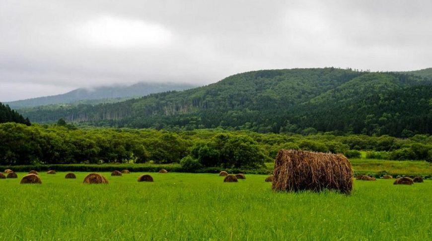стоги сена на зеленых лужайках Сахалина