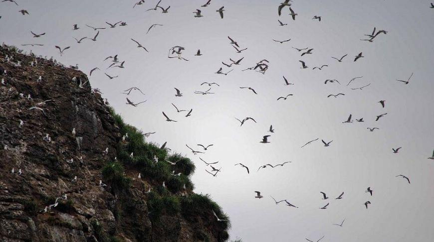 птицы над скалами в небе