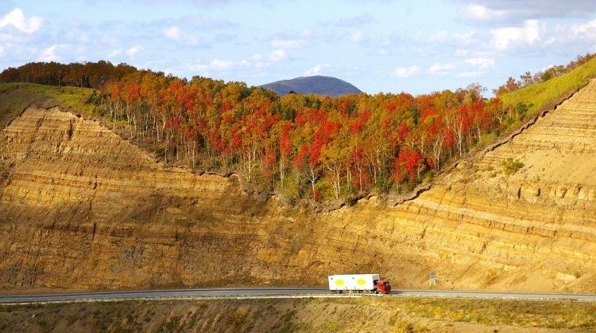 багряный сахалинский лес