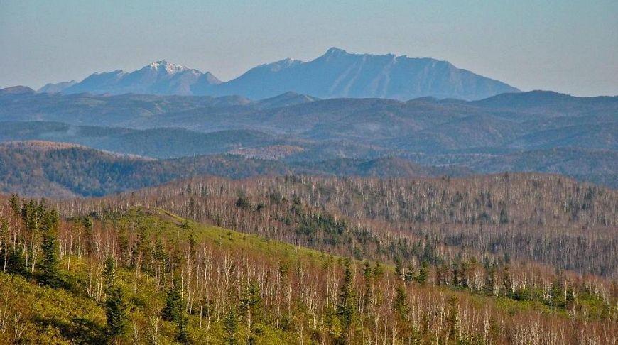 горы за лесом