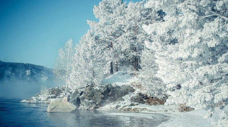 заснеженные деревья зимой