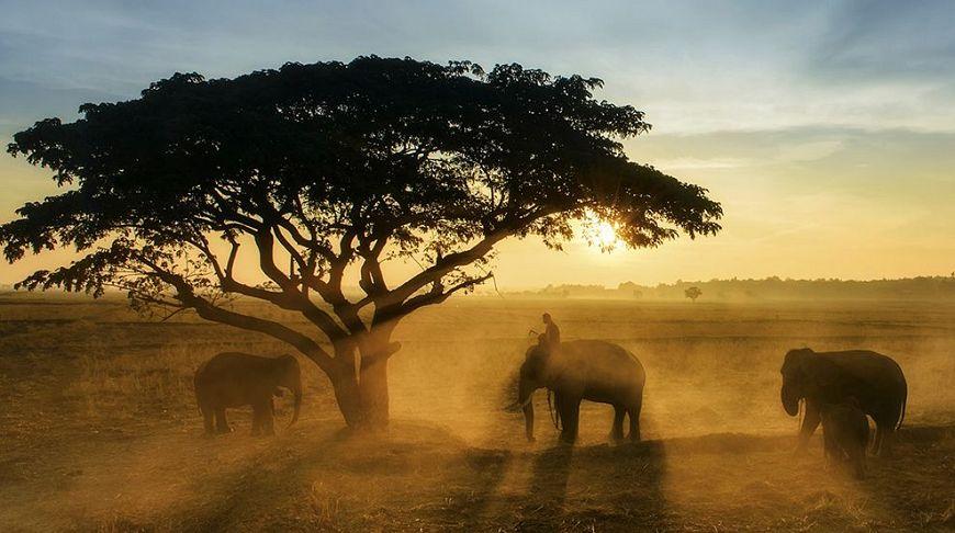 Совершенство природы: 10 невероятных фотографий апреля от National Geographic