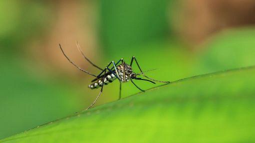 Стоит ли бояться лихорадки денге: отвечают профессионалы госпиталя «Пхукет Интернешнл»