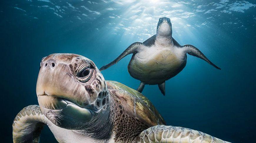 Очарование природой: лучшие фотографии лета от National Geographic