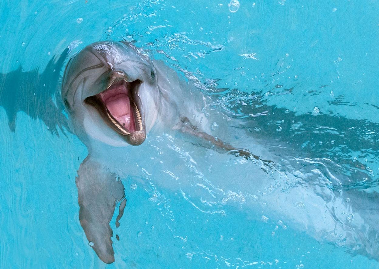 renate dolphin