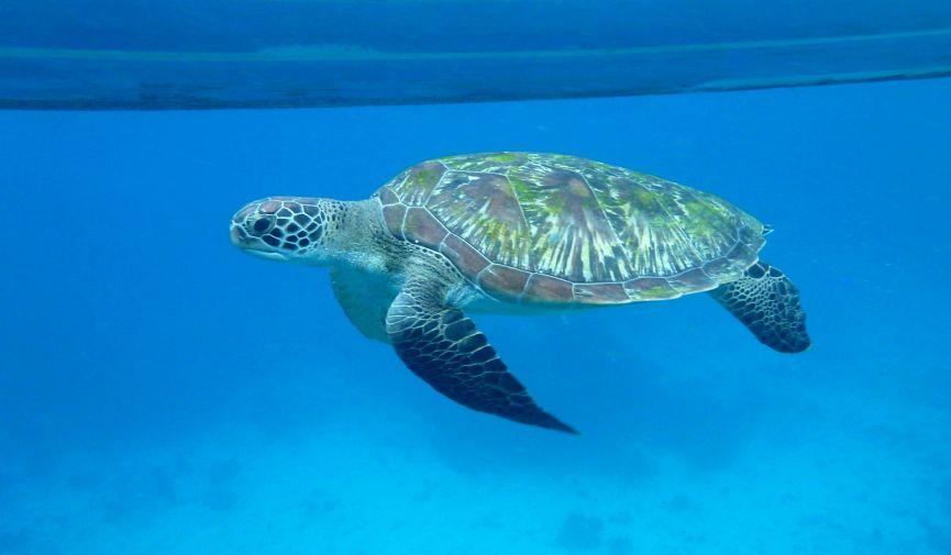 Joy Dive — ваш проводник в подводный мир Тайланда
