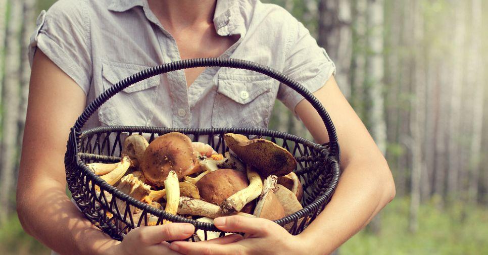 Тихая охота: грибные места в Ленинградской области